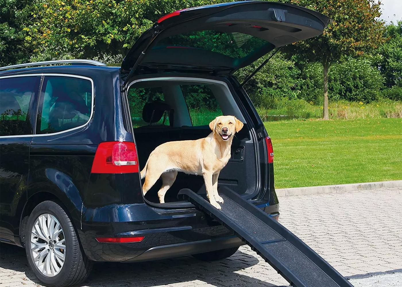 auto transport puppy