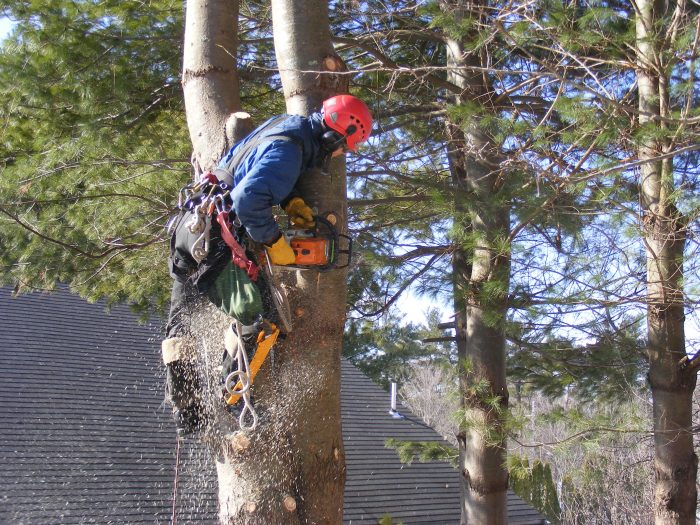 tree cutting trimming and removal services