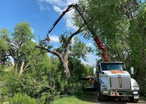 fruit tree pruning services near me