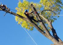 tree care meaning